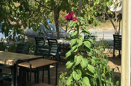 Şah Kahvaltı Salonu Seyhan Bacının Yeri